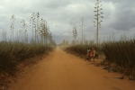 Road to sisal plantation
