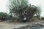 Teotihuacan: Cactus with Leon