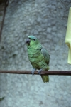 Parrots at our hotel