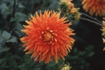 Flowers in Charlotte, P.E.I.