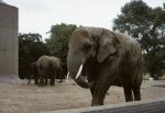Regents Park Zoo